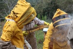 Pčelari u velikim problemima: Zbog korone ne mogu hraniti svoje pčele