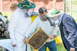 Registar pčelara i pčelinjaka FBiH - prijavite se na vrijeme