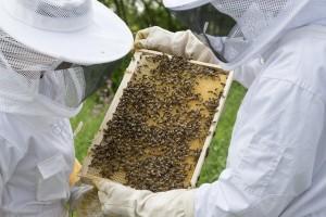 Pčelari, bliži se kraj roka za podnošenje zahtjeva za isplatu potpora!