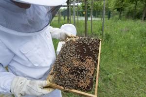 Marijo Krešić: Pčelarstvo ima mnogo potencijala, ali je skup sport