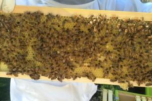 4. Kongres pčelarstva i pčelinjih proizvoda - stižu stručnjaci iz Turske i Velike Britanije