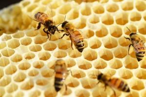 U potpunosti iskorištena omotnica za pčelare: isplaćeno 17,2 milijuna kuna za nabavu opreme i edukaciju