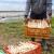 Najčešći način proizvodnje špargle je rasad - pripremite zemljište na vreme