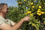Hrvatske mandarine i jabuke opet spašava EU