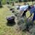 Uzgoj lavande na organski način - lako i ekonomično
