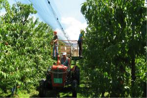 Podsticaji za voćare, vinogradare, povrtare i cvećare