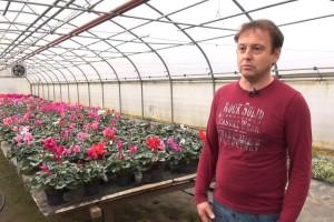 Bernard Savi stručnjak je u uzgoju ciklame: Najbolje uspijeva na 12 Celzijevih stupnjeva