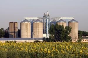 Stručnjaci predviđaju smanjenje svjetske proizvodnje suncokreta