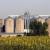 Stručnjaci predviđaju smanjenje svetske proizvodnje suncokreta
