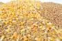 Zaustavljen pad cena soje i pšenice