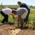 Zadarski beskućnici postaju uspješni poljoprivrednici!