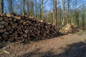 Oduzeli oko 780 metara kubnih šumskih drvnih sortimenata na području Gradiške