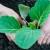 April: Radovi u vrtu, voćnjaku, cvjetnjaku...