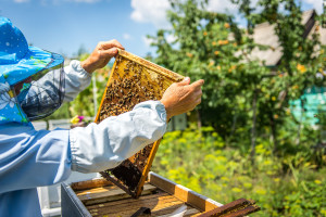 Pčelari, započela je predaja zahtjeva za potpore zbog gubitka paše
