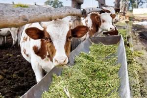 Valjevo opredelilo 52 miliona za podsticaje u poljoprivredi