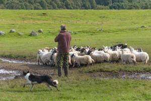 Stočarima od jeseni pravo na preči zakup zemljišta