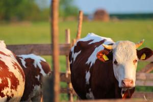 Poljoprivrednici u Kanjiži dobili subvencije za razvoj gazdinstava