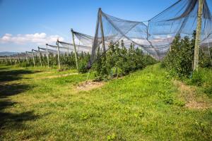 Lučani za poljoprivredu izdvojili 45,3 miliona dinara