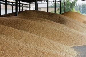 Saković: Domaći ratari neće biti ugroženi uvozom pšenice