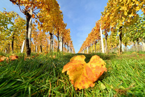Napokon stiže prava jesen?