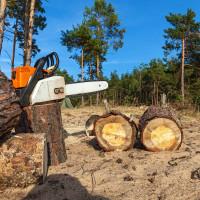 Stiže zakon koji će spriječiti uvoz proizvoda povezanih s krčenjem šuma izvan EU