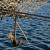 U 2019. rasla proizvodnja slatkovodne ribe, morsko ribarstvo zabilježilo pad
