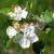 Do petka slab mraz - moguća oštećenja na procvetalom voću
