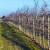 Nenad Magazin: Za nove zasade voća treba sačekati bar do polovine novembra