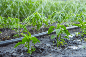 Pribojski poljoprivrednici besplatno dobili creva za navodnjavanje