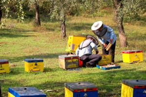 Još se ne zna razlog pomora 80 miliona pčela u Kikindi