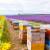 Novi propisi: Od susednog pčelinjaka udaljenost najmanje 200 metara