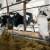 Za veterinarstvo 2,5 miliona KM - cilj osigurati plasman BiH proizvoda na strano tržište