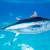 Raspodjela Državne kvote u 2019. godini za ribolov plavoperajne tune