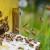 Zbog pomora pčela, Kikinda dodeljuje nove rojeve