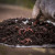 Proizvodnja glistenjaka i njegov značaj u povrćarskoj proizvodnji