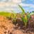 Kako povećanu kiselost zemljišta podnose biljne kulture?