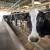 Monitoring mikotoksina je važan za farmu - kako ih prepoznati i koja su rješenja?