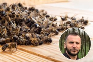 Dino Haračić: Uginula zajednica pčela nije sramota, ali je opasnost