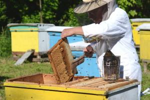 Vladimir Milić: I uginule pčele nam pomažu