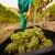 Francuska traži od EU-a osnivanje fonda za pomoć vinarima