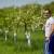 Do 65 odsto povraćaja za podizanje višegodišnjih zasada voća i hmelja