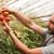 Farme u zatvorenom su naša budućnost?