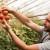 Bespovratna sredstva za mlade poljoprivrednike