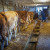 Prljavština na stočnim farmama česta pojava i u Švedskoj? Zašto je čistoća važna?