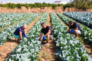 Izmenjen IPARD program: Olakšice za voćare i povrtare