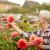 Radovi u bašti tokom avgusta: Evo kako da negujete cveće