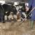 Dodjela bespovratnih sredstava za poljoprivredu do kraja ove sedmice
