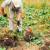 Mraz usporio vegetaciju povrća - to će se odraziti na rod i zaradu