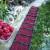 Pad proizvodnje maline u Čileu, podigao cenu ovog voća u svetu