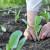 Za amatere povrtare: Evo kako da vam uspe bašta